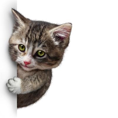 Catbusters: Найди Кота