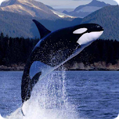 Killer Whales Live Wallpaper