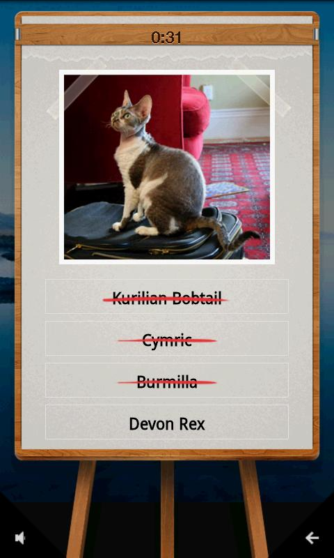 QuizTutor:Cats - screenshot