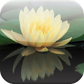 Lotus Flower Live Wallpapers