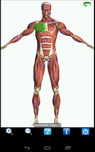 Visual Anatomy Free - screenshot thumbnail