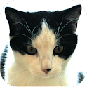 Cat Diaries Lite icon