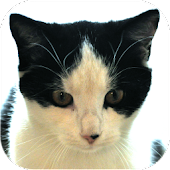 Cat Diaries: expenses, events, cat age calculator