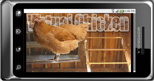 Virtual Chicken