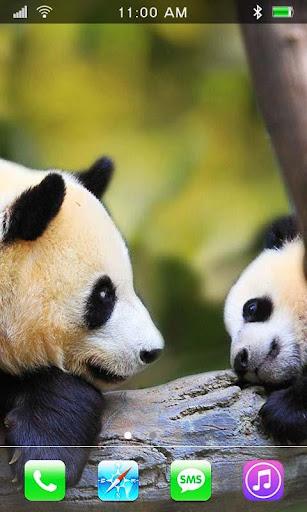 Panda Bears Cool LWP