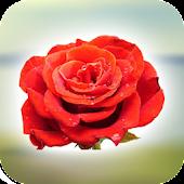 Rose Dialer