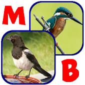 Memory Bird: Britain