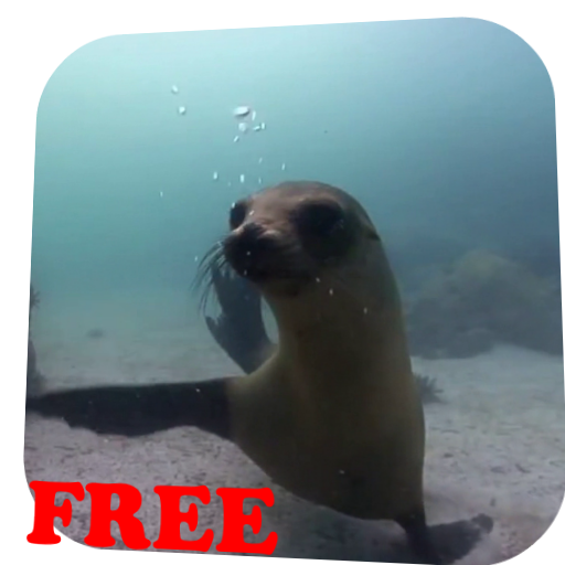 Fur seal Video Live Wallpaper LOGO-APP點子