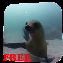 Fur seal Video Live Wallpaper icon