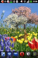 Screenshot of Spring Flowers Free Wallpaper