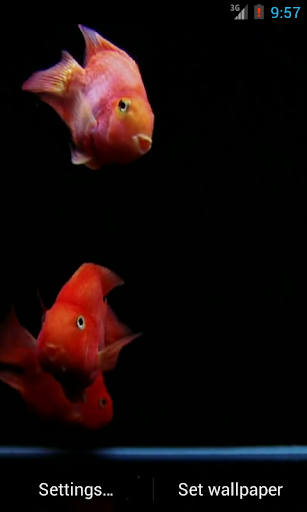 Red Fish Aquarium LWP HD