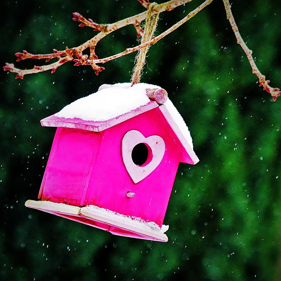 Bird house in the snow by Steve Murphy - Artistic Objects Other Objects ( love, seasonal, heart, tree, seasons, birdhouse, snow, weather, branch, snowflake, snowy, pink, winter, cold )