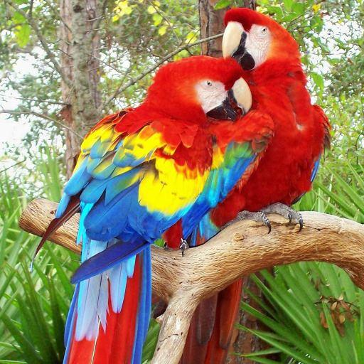 Colorful Parrot Live Wallpaper