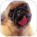 Dog Lick Screen Cleaner icon