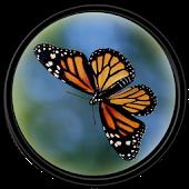 Butterfly [HD] Wallpapers