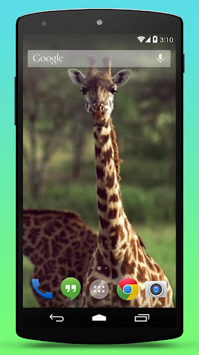 Wild Giraffe Live Wallpaper