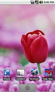 Tulip Wallpapers screenshot 3