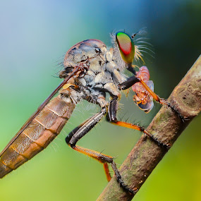 LUNCH... by Ahmad Zaini - Animals Insects & Spiders