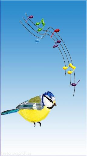 اجمل رنات الطيور والعصافير
