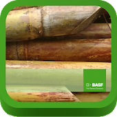 BASF México-Cultivo de la Caña