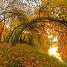 Toamna cea de fiecare an...atat de co7lorata...si fotografiile de toamna de fiecare an...  rasaritul din 11.10.2014 by Lux Aeterna - City,  Street & Park  City Parks (  )