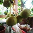 Mele di bonsai