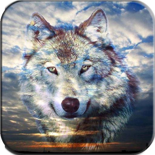 Wolf Wallpaper 個人化 App LOGO-APP試玩