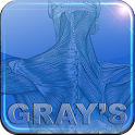 Gray's Anatomy icon