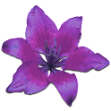 Lilies & Spices Foreplay Game icon