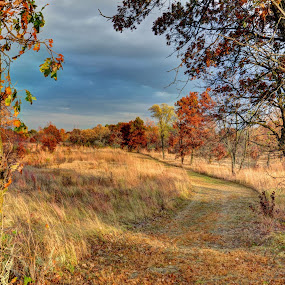 The Perfect Path by Dave Knapp - Landscapes Prairies, Meadows & Fields ( park, fall, path )