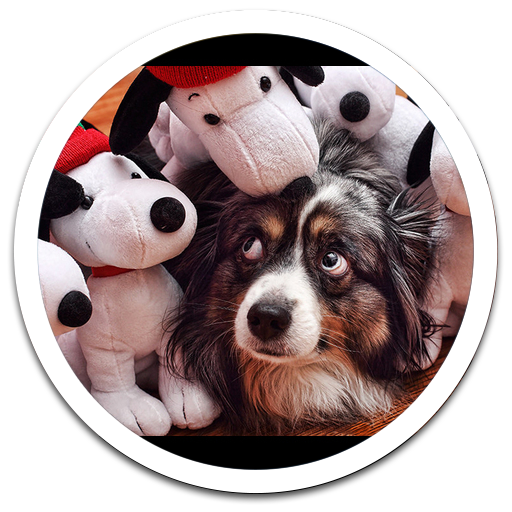 Funny Dogs Live Wallpaper 個人化 App LOGO-APP試玩