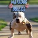 Matador Bullies logo
