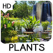 Plants Wallpapers
