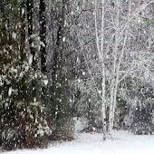Falling Snow Live Wallpaper