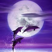 Dolphin -Amethyst-
