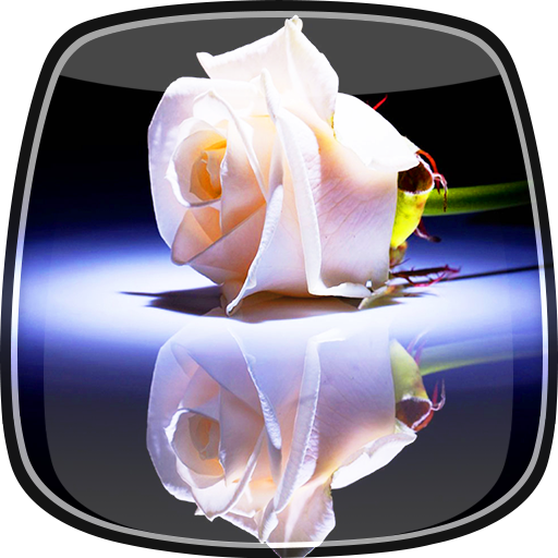 个人化の白いバラ ライブ壁紙 LOGO-記事Game