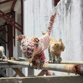 Cats and wool by Gareth Taylor - City,  Street & Park  Neighborhoods (  )