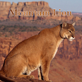 Mountain Lion Sounds