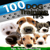 Great Dog Training Tips Guide