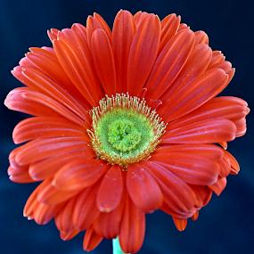 by Leon Neal - Flowers Single Flower