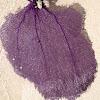 purple sea fan