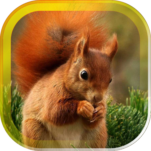 Squirrel Jokes live wallpaper 個人化 App LOGO-APP試玩