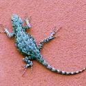 Green Spiny Lizard