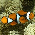 Marine Aquarium Fish 1 FREE icon