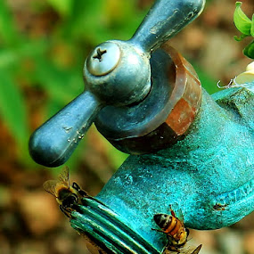 Thirsty Bees-lr by Jim Johnston - Animals Insects & Spiders