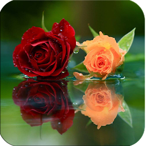 Love Rose Live Wallpaper Free Android App Market