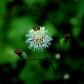 by Akhmat Haridi - Flowers Flowers in the Wild