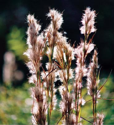 Nueces River Plants