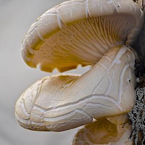 Mushroom on Tree Trunk by Miren Etcheverry - Nature Up Close Mushrooms & Fungi ( mushroom, champignon, fungi, nature, wildlife, fungus, , natural )