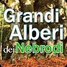 Free install Grandi alberi dei Nebrodi apk for Nokia